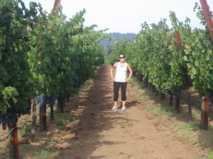 Vineyard Run in Calistoga, Napa Valley